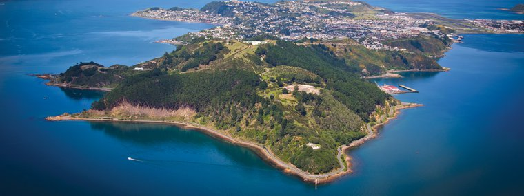 Trees that Count Display Miramar Peninsula Aerial iStock-134056256.jpg